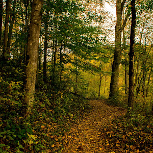 The Path Less Travelled.jpg