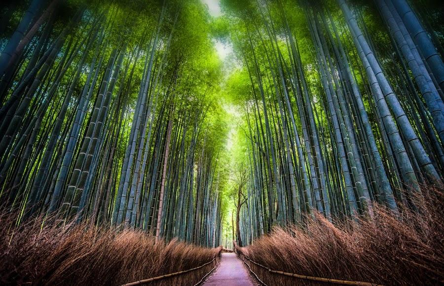 Bamboo Overdose by Nicola Scarselli - Landscapes Travel ( bamboo, japan, pathway, kyoto, long exposure, forest, arashiyama )