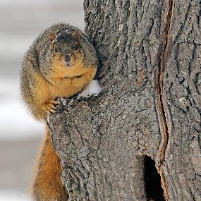 A furry friend in my front yard today. by Robert Daveant - Uncategorized All Uncategorized