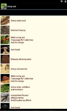 昆虫図鑑 - BugPediaのおすすめ画像4