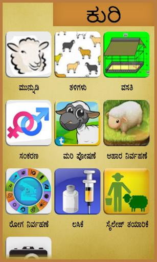 Sheep Kannada