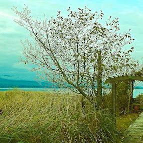 Meadowlike by Art Straw - Landscapes Prairies, Meadows & Fields ( field, water, tree, house )