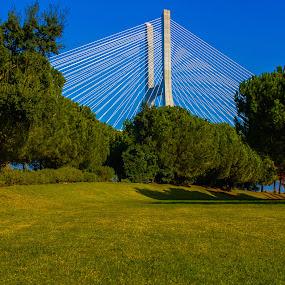 A walk in the park by Alexandre Mestre - City,  Street & Park  City Parks ( park, sunny, trees, bridge, lisbon,  )