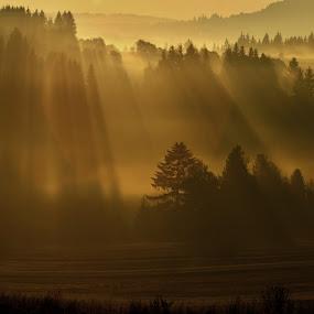 rays of the sun by Katka Kozáková - Landscapes Forests ( mornig, sun, , #GARYFONGDRAMATICLIGHT, #WTFBOBDAVIS )