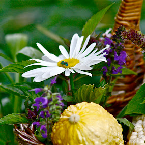 by Alexa Bessler - Nature Up Close Gardens & Produce (  )
