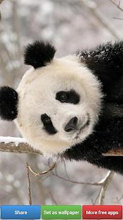 玩免費生活APP|下載熊貓壁紙 app不用錢|硬是要APP