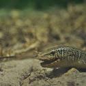 Mimic Glass Lizard
