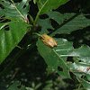 Tree Frog?