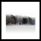 Silent forest livewallpaper