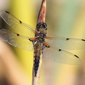 dragomfly by Ld Turizem - Uncategorized All Uncategorized
