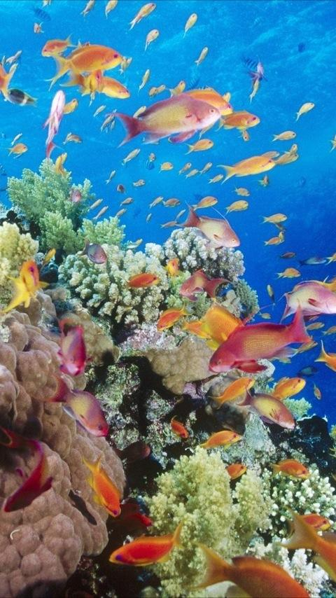 Underwater Wallpapers - Android Apps on Google Play