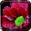 Shiny Flowers Live Wallpaper icon