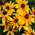 3D sun flower logo