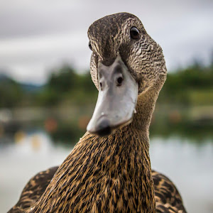 8-15-14 Lake Placid 6.JPG