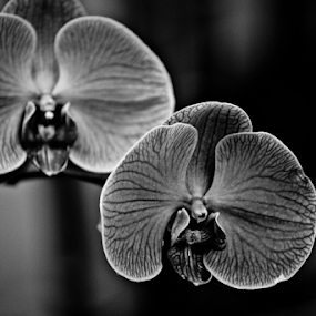 Wild Orchids by Danielle Falknor - Black & White Flowers & Plants ( orchid, black and white, flowers, garden )