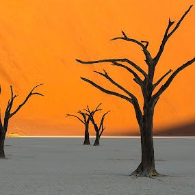 The Dance by Nancy Arehart - Nature Up Close Trees & Bushes ( orange, dunes, dead trees, landscape, namibia,  )