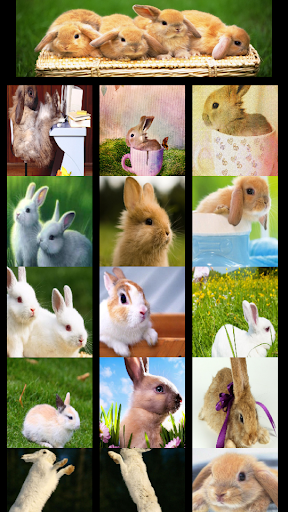 Wallpaper Bunny Bunny