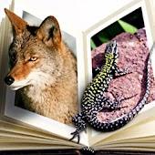 Rainforest Animals Bible