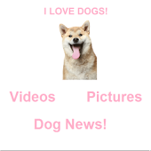 Dog Videos & Pictures