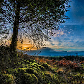 Sunset in Dumfries & Galloway by Aiden Ogden - Landscapes Forests ( colour, sky, nature, colorful, color, sunset, colors, forest, landscape, colours )