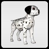 Dalmatian RocketDoge
