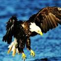 3D eagle 1 logo