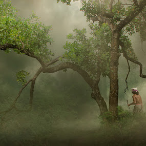 by iD 's - Landscapes Forests