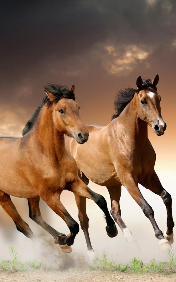 Horses live wallpaper android apps on google play horses live wallpaper screenshot voltagebd Choice Image