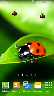 Ladybug Live Wallpaper - screenshot thumbnail