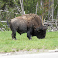Wildlife in the National Parks Adventure Bus tours