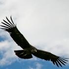 Sky Field icon