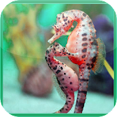 Seahorse Jigsaw Puzzles