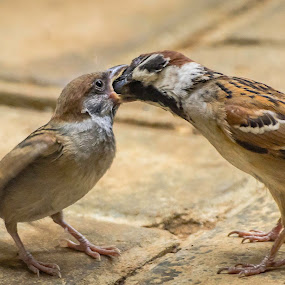 Fiding the Sparrow by Dennis Gaspersz - Animals Birds (  )