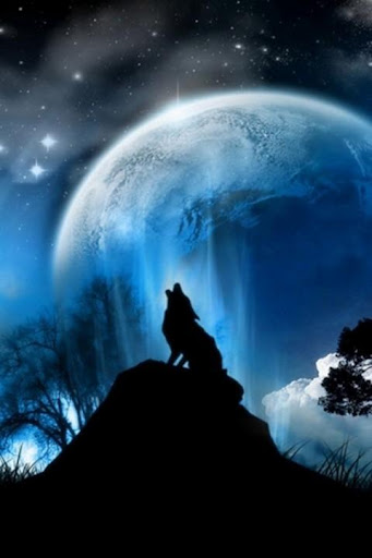 Wolf HD Wallpapers FREE