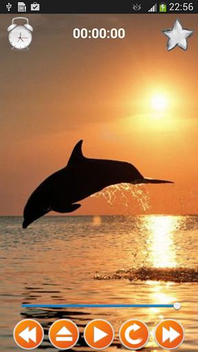 Dolphin Sounds Sleep Relax