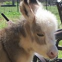 Cute Donkey Wallpaper Adorable icon