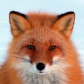 Fox HD LWP Lite icon