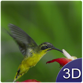 Flying Birds 3D