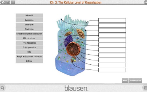 Blausen Anatomy and Physiology - screenshot thumbnail
