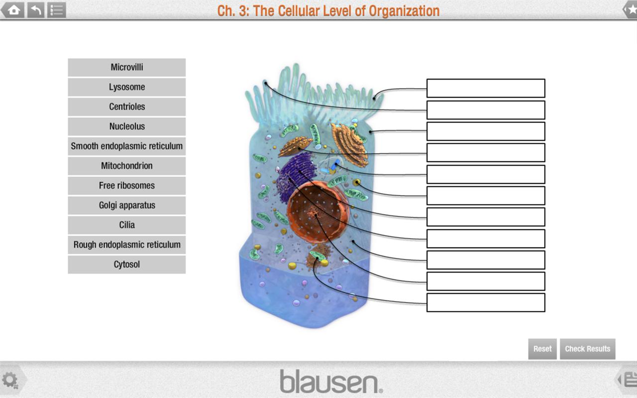 Blausen Anatomy and Physiology - screenshot