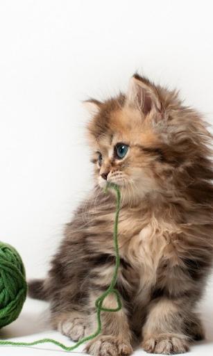 小猫动态壁纸