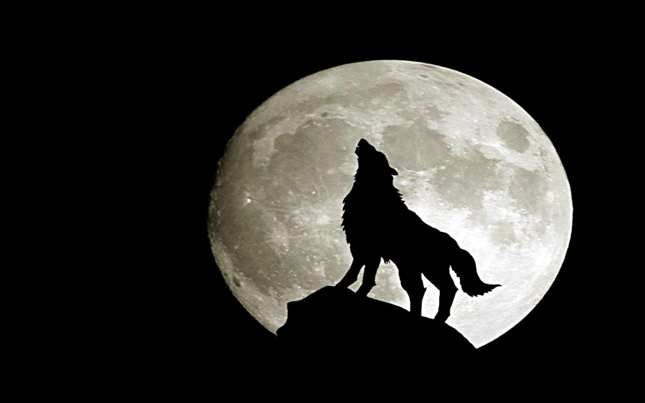 Wolves Live Wallpaper Android Apps On Google Play