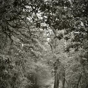 by Abhijit Mukhopadhyay - Black & White Landscapes