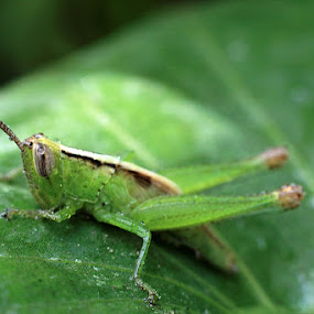 macro beginner by Chairul . - Animals Insects & Spiders