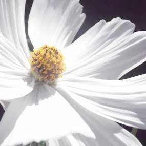 by Ryan Beasant - Flowers Single Flower