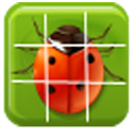 Insect Jigsaw Puzzles icon