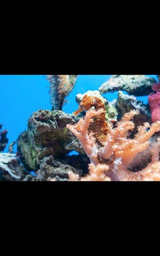 Aquarium HD Live Wallpaper