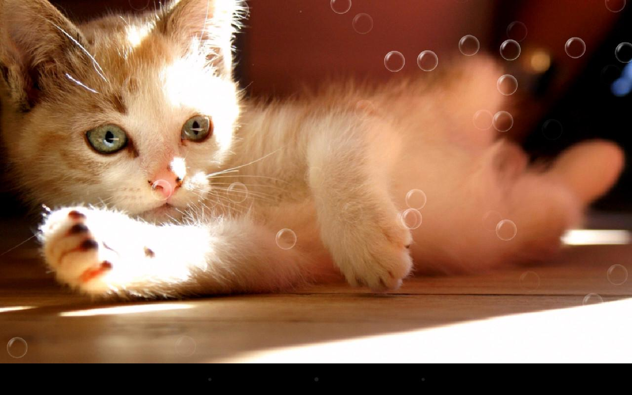 Lazy Cat Live Wallpaper  Android Apps on Google Play