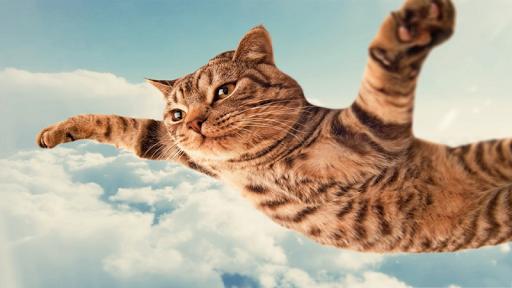 Cat Dreamer