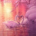 Love Swans In Pink Snowy Pond logo